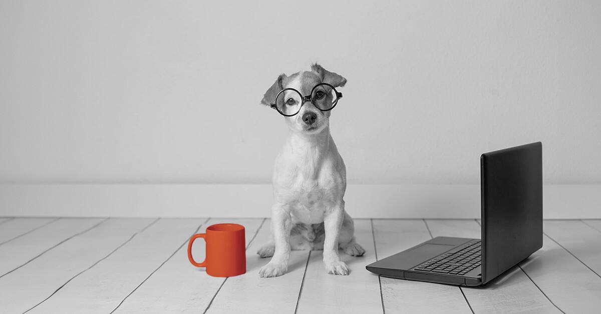 Man bites dog: the secret to writing perfect headlines