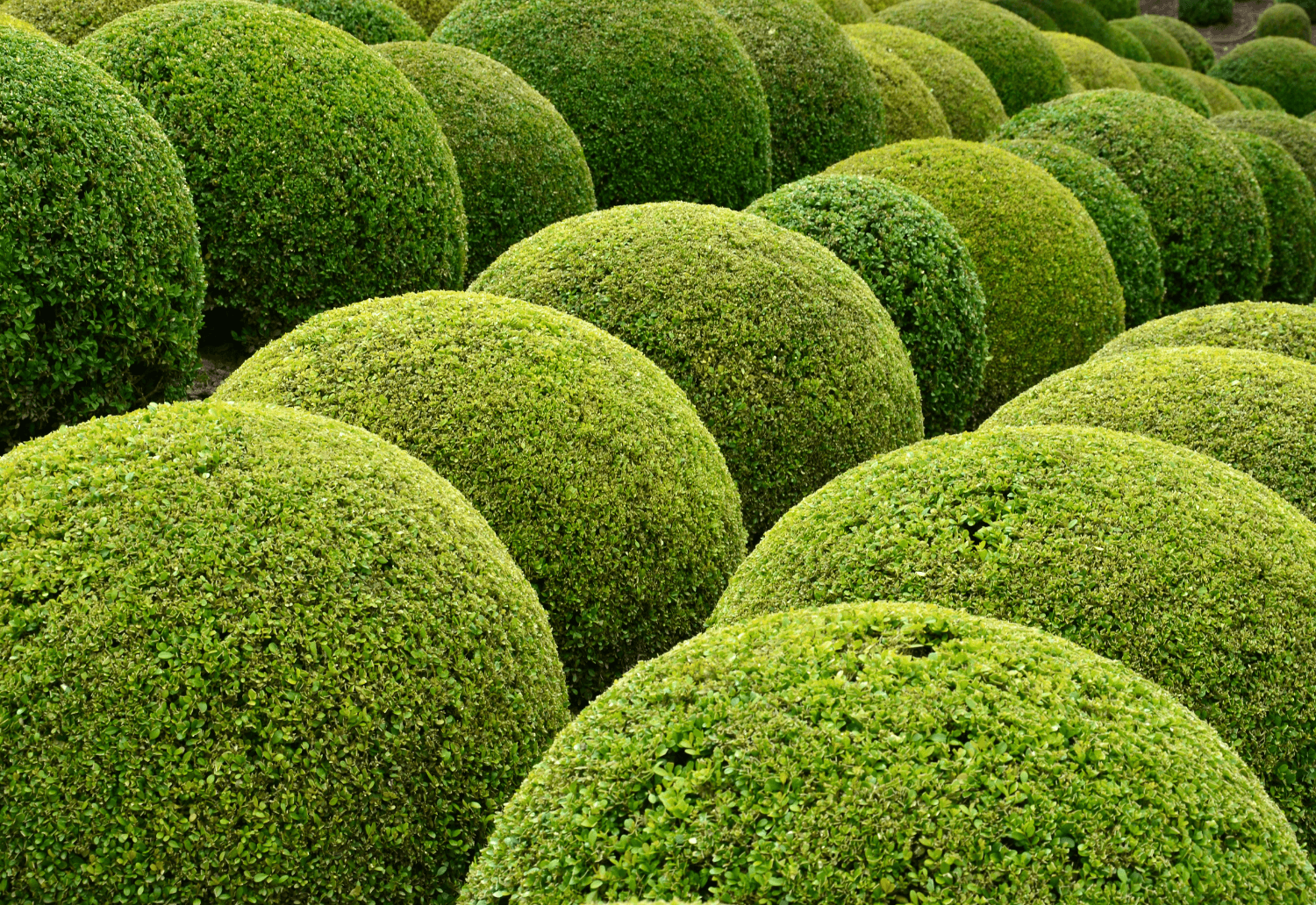 Evergreen content - what it is and why it still matters for your marketing strategy